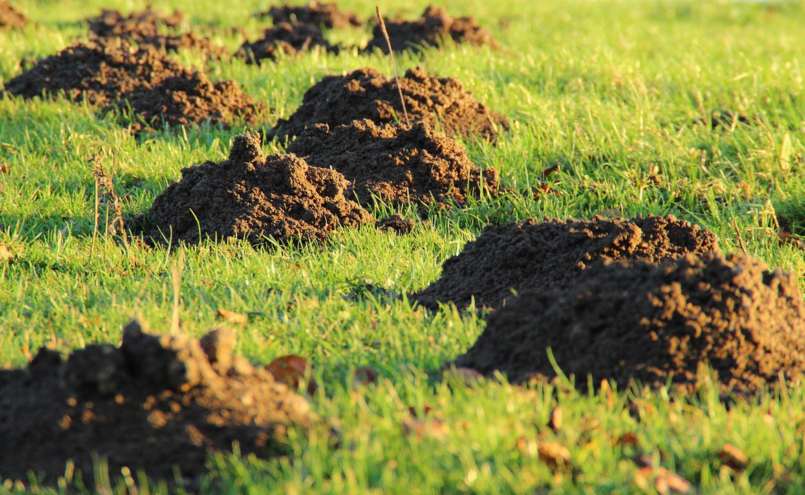 Gopher and Moles