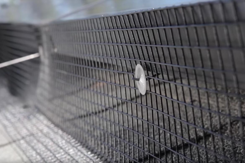 Pigeon Control 1- Aantex Pest Control