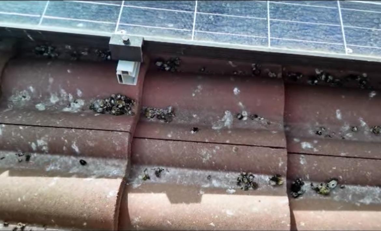 Pigeon Control 3 - Aantex Pest Control