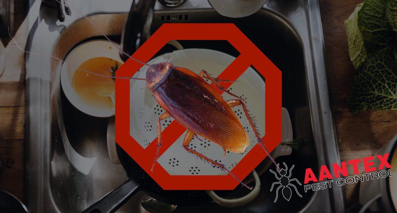roach prevention tips