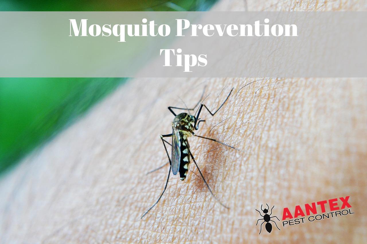 Prevent Mosquito