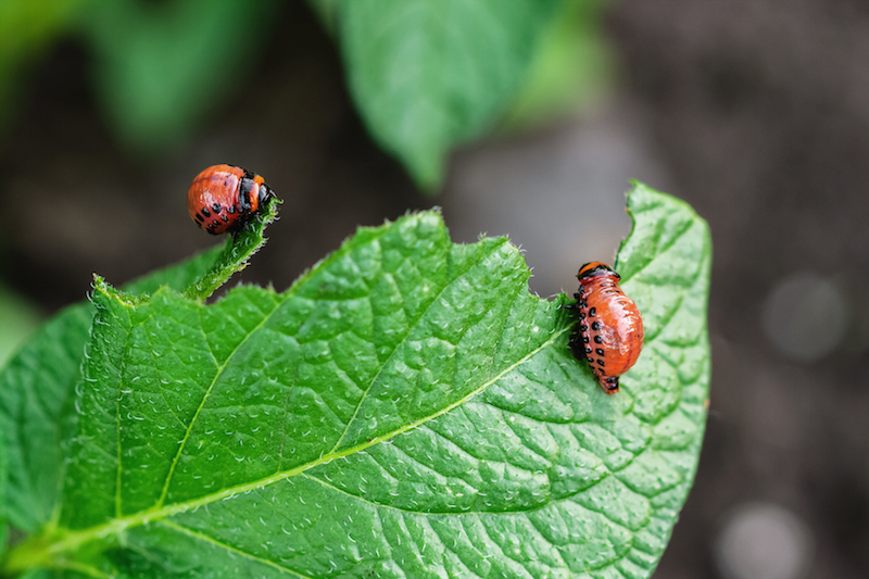Prevent Common Garden Pests