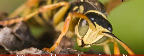 Aantex Pest Control Professionals