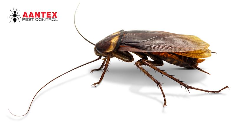 Roach Infestation - Pest Control
