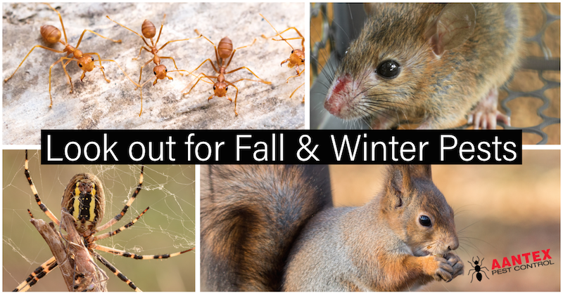 Winter and Fall Pests in California