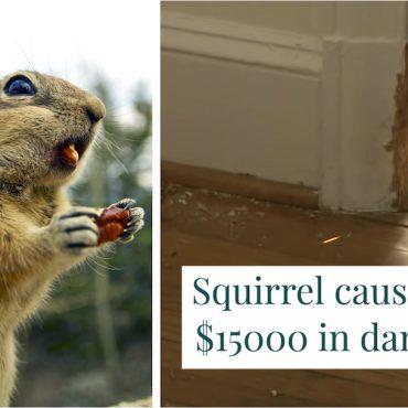 Rodent - Pest Control