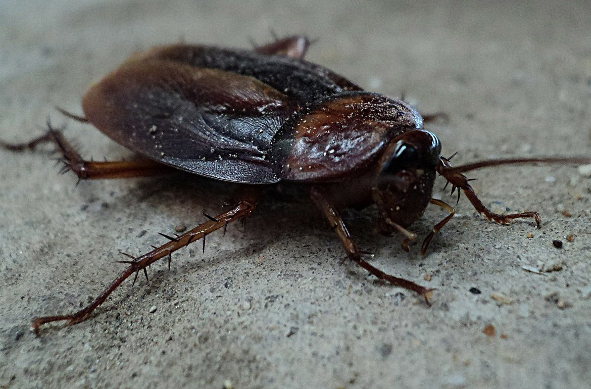 The Worst Pests Require Professional Pest Management