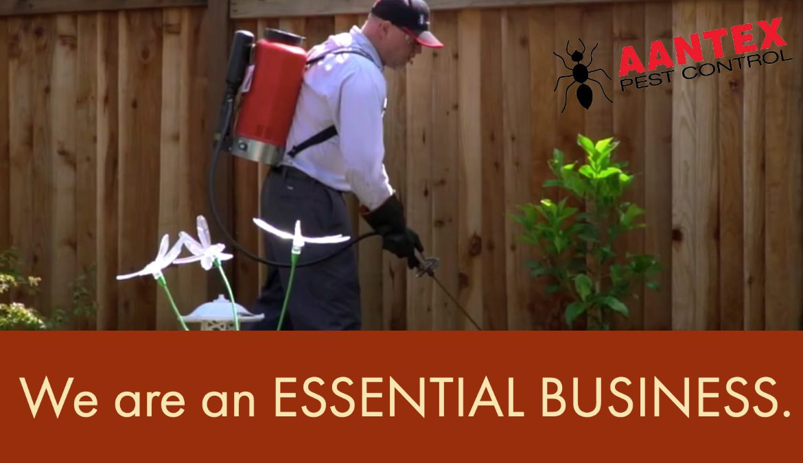 Pest Management Is An Essential Service