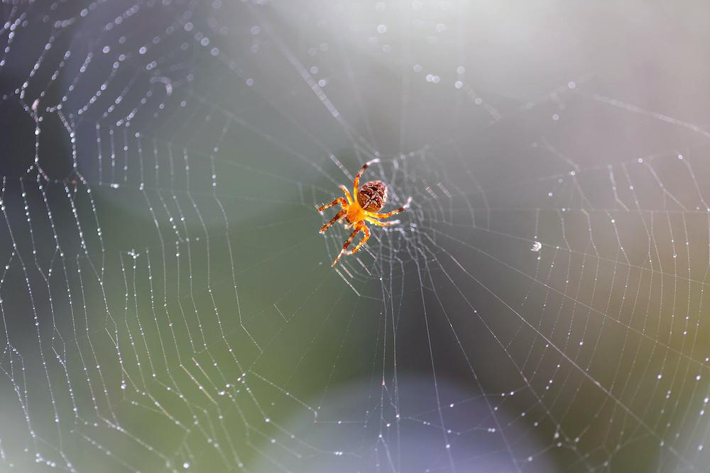 Spider during Spring