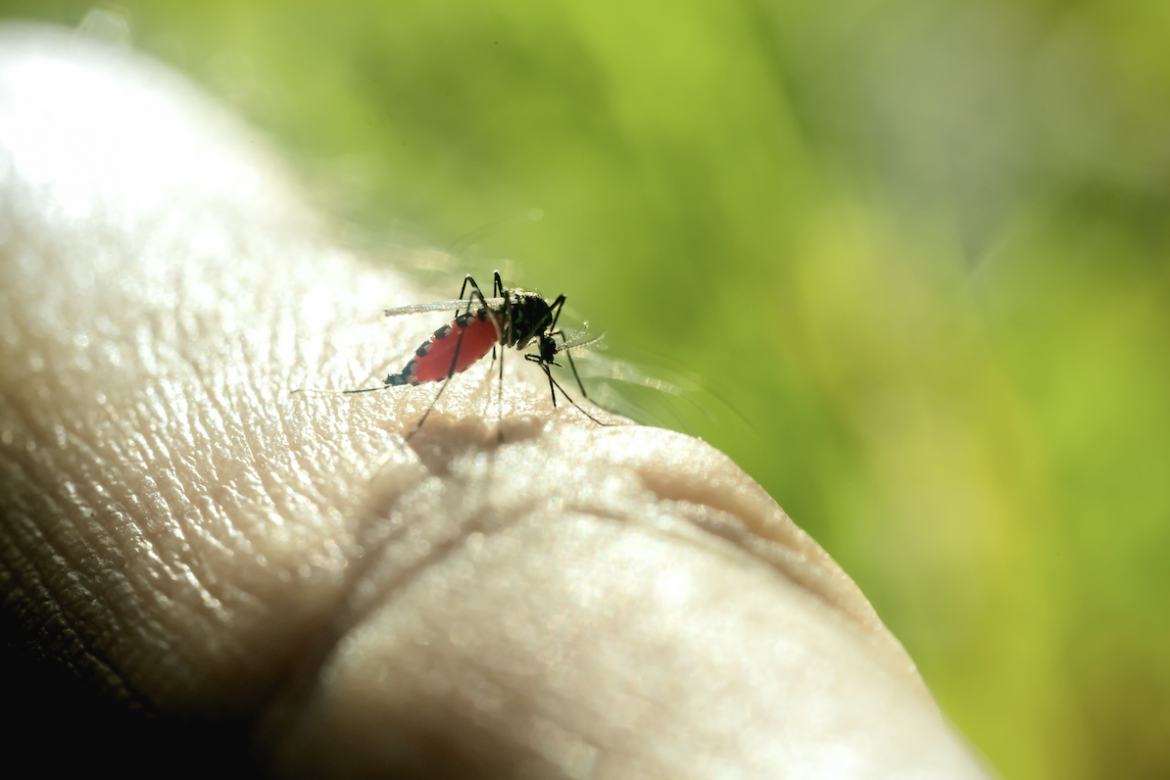 Contra Costa Residents Beware of West Nile