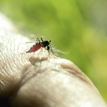 Mosquito and West Nile