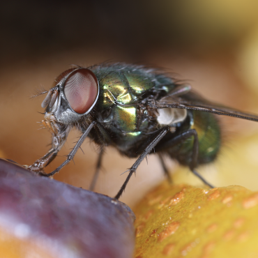 Simple Tips to Prevent Pests like Flies