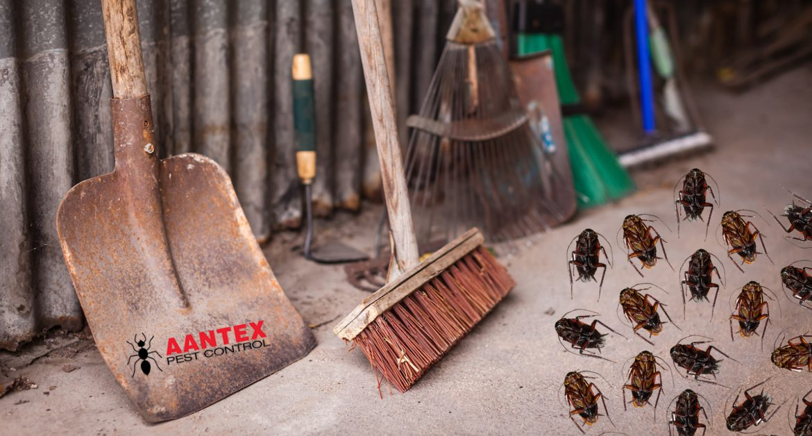 Tips to Prevent A Winter Cockroach Infestation