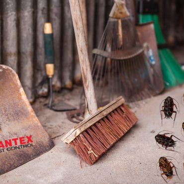 Aantex Pest Control - How to Rid of Cockroach