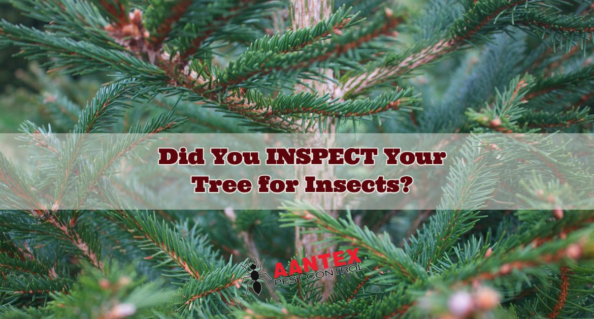 Did you Inspect your Christmas Tree for Pests?