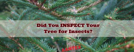 Aantex Pest Control - did you inspect your Christmas Tree