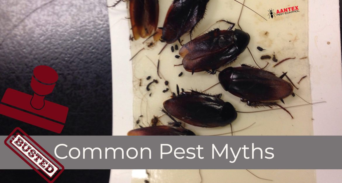 Common Pest Myths