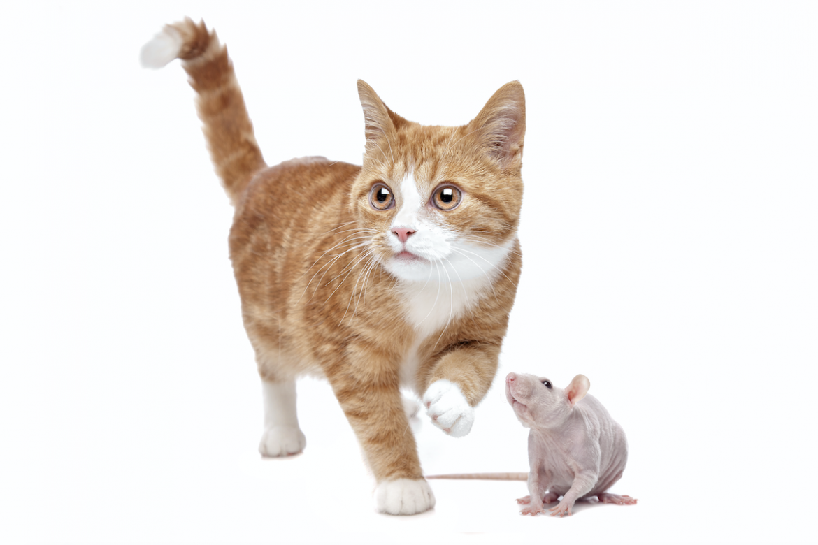 Pets for Pest Control