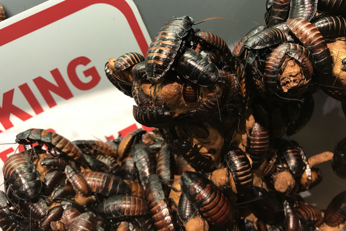 12 Fascinating Cockroach Facts