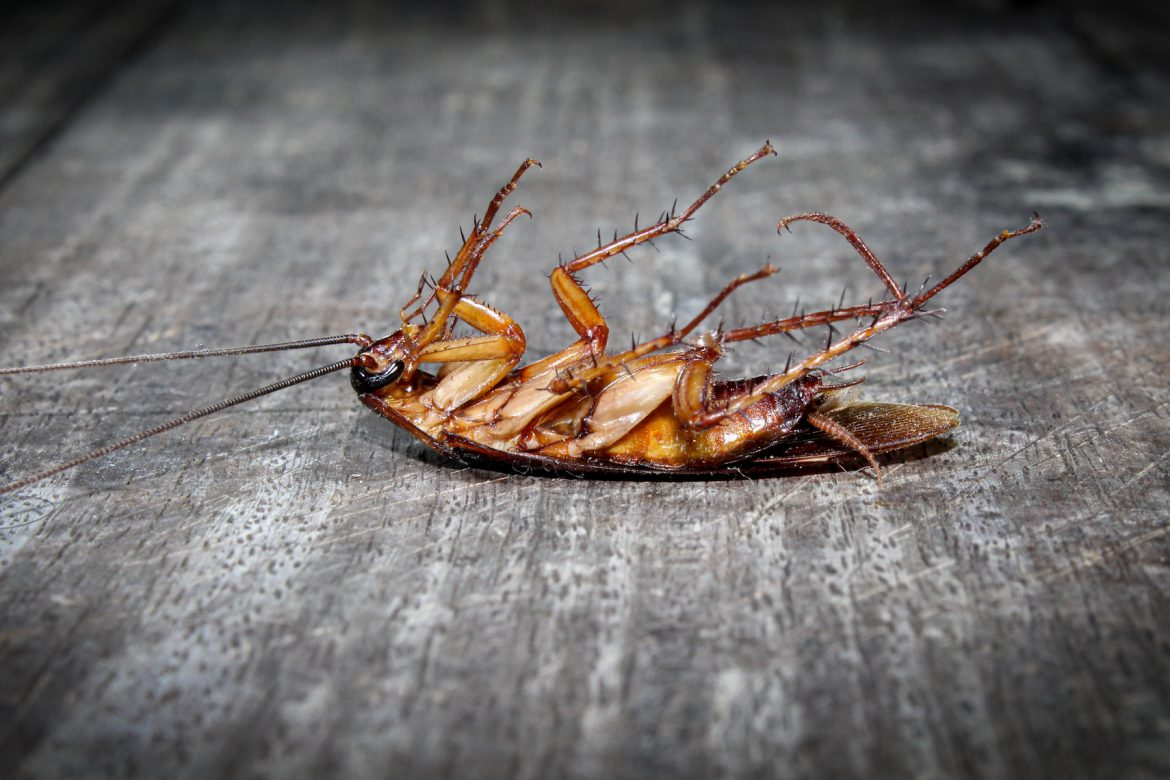 3 Reasons Pest Control will Help Maintain a Healthy Household