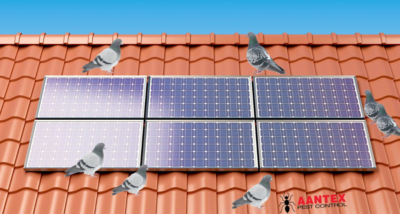 Pigeon Damage to Solar Panel
