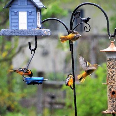 backyard-bird-feeders