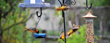 backyard-bird-feeders