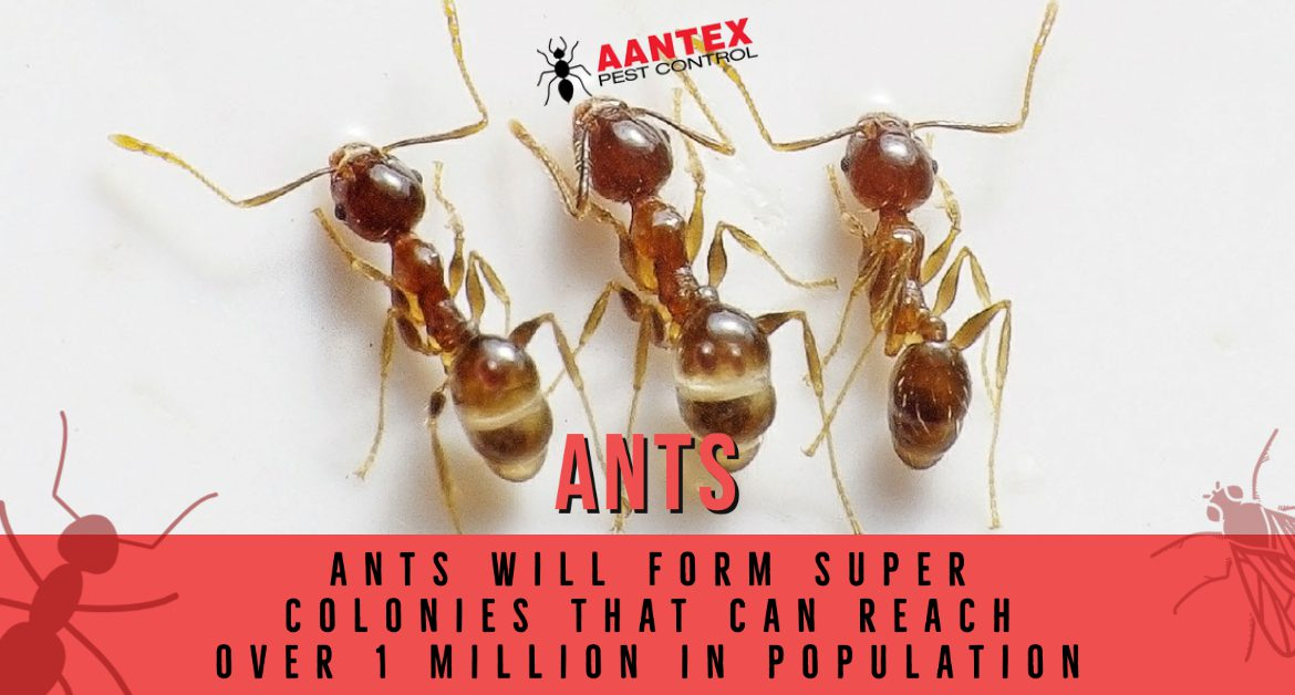 Common Summer Pests: Ants
