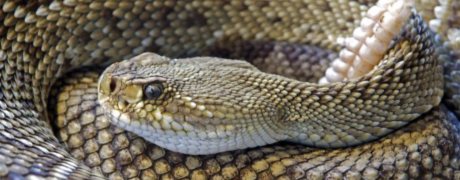 Snakes- Common Summer Pest
